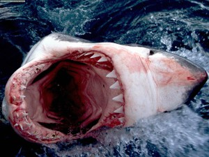 Челюсти большой белой акулы