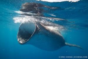 Полутораметровая пасть большой акулы