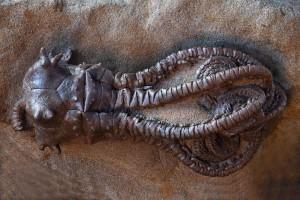 Массовое вымирание пермского периода