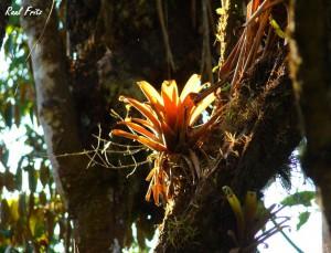 Плоды и цветы растут прямо на стволах деревьев