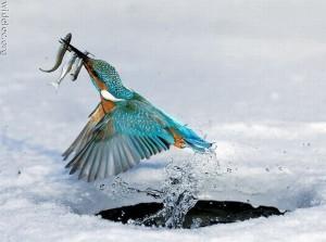 Умелый рыбак