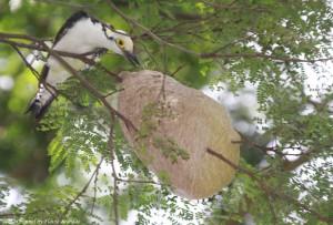 Разоряя осиное гнездо