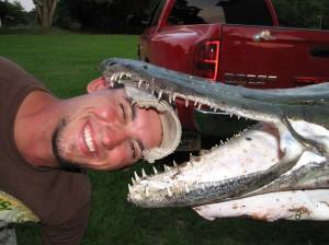 Зубы рыбы-аллигатора тонкие и острые
