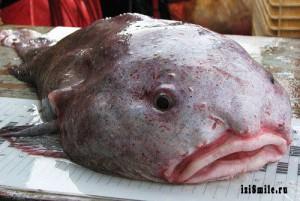 На поверхности рыба капля не так красива, как в глубинах океана