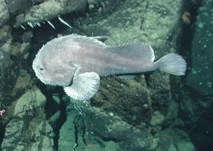 Фото рыба капля в толще воды