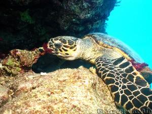 Бисса ест морскую губку