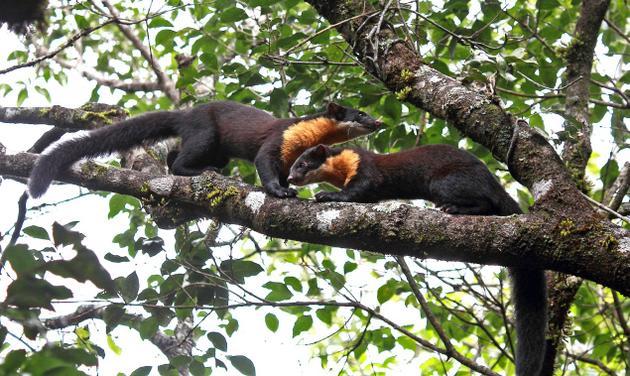 Пара зверьков на дереве