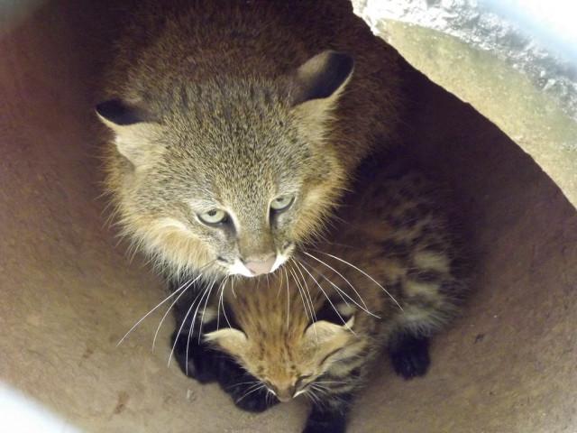 Котенок колоколо